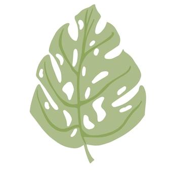 熱帯のモンステラの葉が分離されました。植物要素
