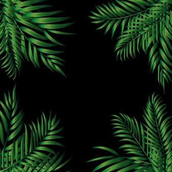 Tropical natural palm.  illustration
