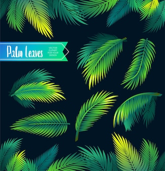 Tropical palm leaves exotic branches from rainforest