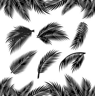 Тропические пальмовые листья изолированные силуэты на белом фоне