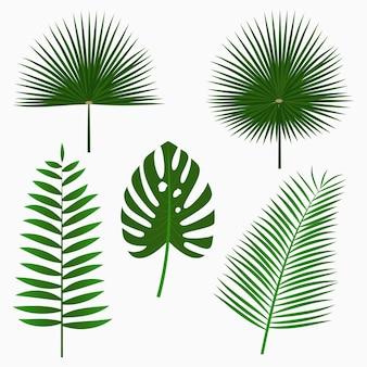 열 대 야자수 잎 정글 잎 세트 흰색 배경에 고립 이국적인 식물