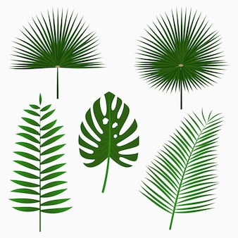 Tropical palm leaves jungle leaf set isolated on white background exotic plants
