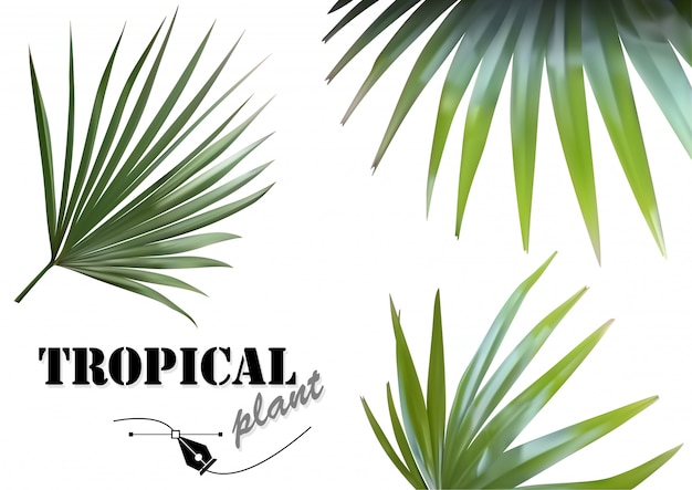 Tropical palm leaves set - фотореалистичные и подробные иллюстрации тропических растений