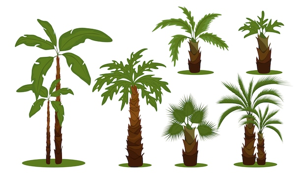 Tropical palm trees. green leaves branches and trunks cartoon collection on white background. exotic trees that grow in warm places