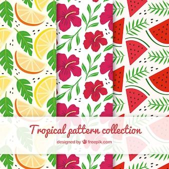 Raccolta di motivi tropicali con fiori e frutti