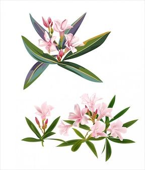 열 대 핑크 꽃