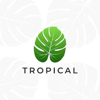 Tropical plant leaves logo. monstera leaves logo design. vector illustrations.