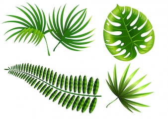 Tropical plant leaves set. Monstera, fern, palm, yucca.