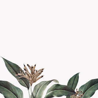 Tropical plant mockup illustration