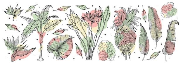 熱帯植物自然セット。ラインアート手描きセット。ヤシの木のジャングルの花。図。