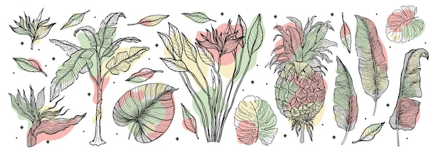 Tropical plant nature set.line art hand drawn set. palm tree jungle floral.  illustration.