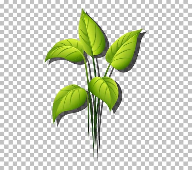 透明な背景の上の熱帯植物