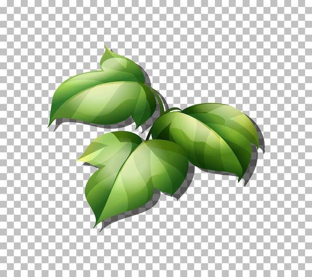 투명에 열 대 식물