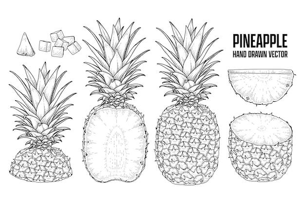열대 식물 파인애플 손으로 그린 스케치 벡터 식물 삽화