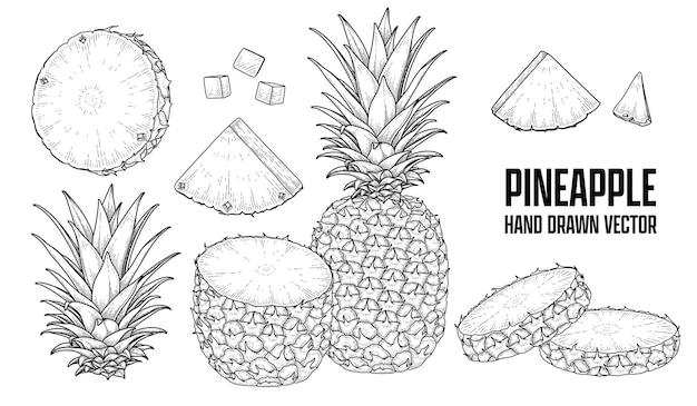 Тропическое растение ананас рисованной эскиз вектор ботанические иллюстрации