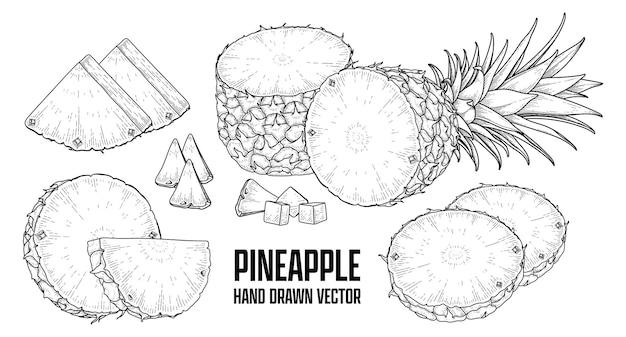 熱帯植物パイナップル手描きスケッチベクトル植物画