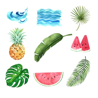 Tropical plant watercolor creative element, design vector illustration.