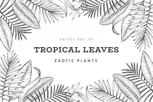 Tropical plants banner design. hand drawn tropical summer exotic leaves illustration. jungle leaves, palm leaves engraved style. vintage background design