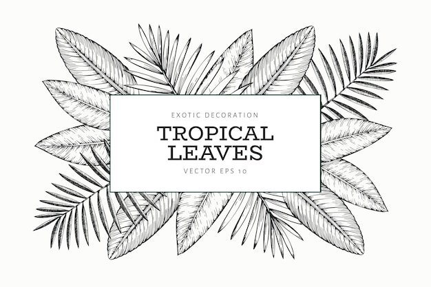 熱帯植物のバナーデザイン。手描きの熱帯夏のエキゾチックな葉のイラスト。ジャングルの葉、ヤシの葉が刻まれたスタイル。ヴィンテージの背景デザイン