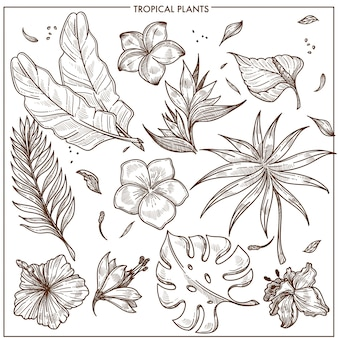 Tropical plants and exotic flowers sketch vector isolated icons set collection