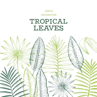 Tropical plants  . hand drawn tropical summer exotic leaves illustration.