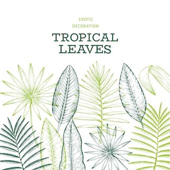 Тропические растения. нарисованная рукой иллюстрация листьев тропического лета экзотическая.