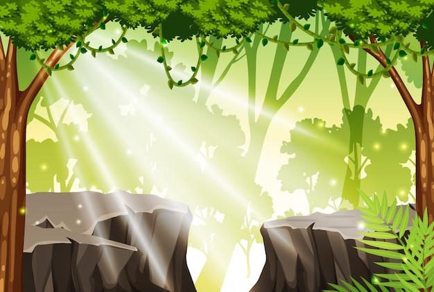 A tropical rainforest background