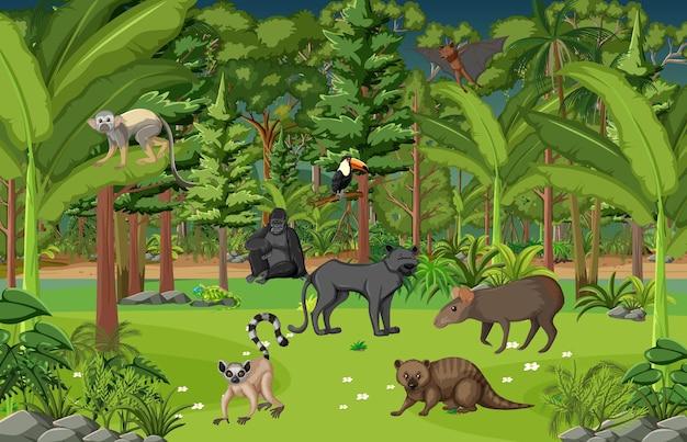 さまざまな野生動物が生息する熱帯雨林のシーン