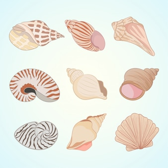 Tropical shells underwater
