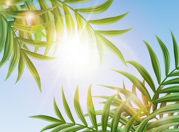 야자수 잎과 태양이 빛나는 열 대 하늘 배경.