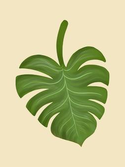 Tropical split leaf philodendron illustration