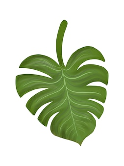 Tropical split leaf philodendron illustration
