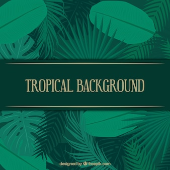 Tropical summer background with big plants