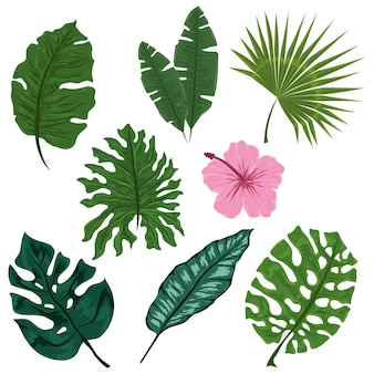 熱帯植物自然の花の葉