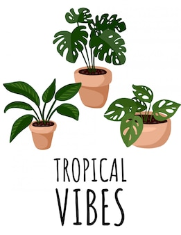 Tropical vibes postcard. potted succulent plants flyer. cozy lagom scandinavian style