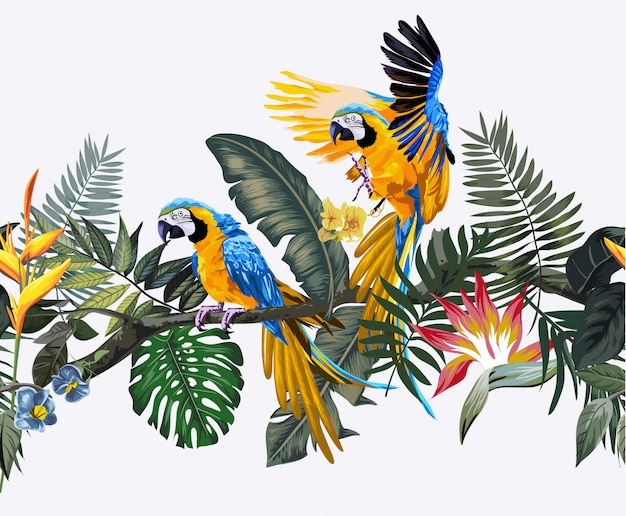 Tropical wild and macaw parrots