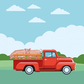 Truck and pig