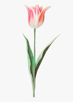 Тюльпан в винтажном стиле