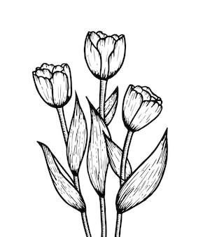 チューリップの花黒と白の孤立した花束スケッチイラスト