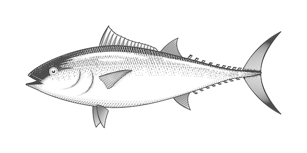 Tuna isolated on white