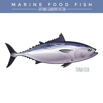 Tuna. marine food fish