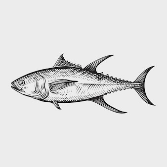 Tuna seafood hand drawn engraving style illustrations
