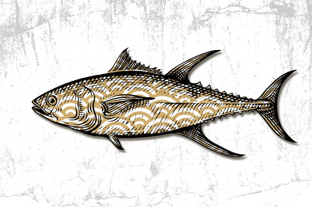 Tuna seafood hand drawn engraving