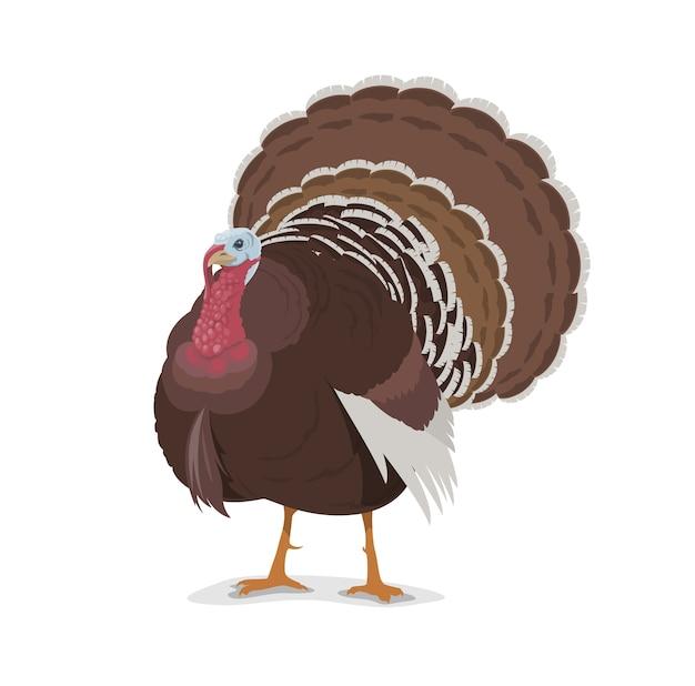 Талисман шаржа индейки, птица птицефермы, символ праздников дня благодарения. домашняя птица домашнего скота или дикий петушок индейки с коричневым оперением и красивым хвостом, изолированный значок
