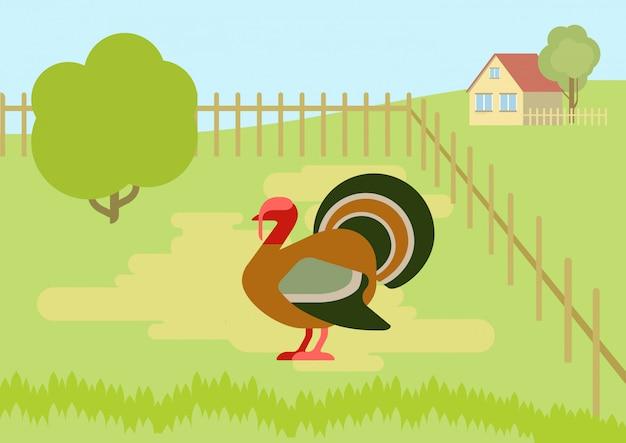 Turkey on the farm courtyard flat design cartoon   wild animals birds.