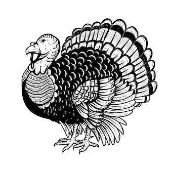 白い背景の上のトルコのイラスト。感謝祭のテーマ。ポスター、カードの要素。図
