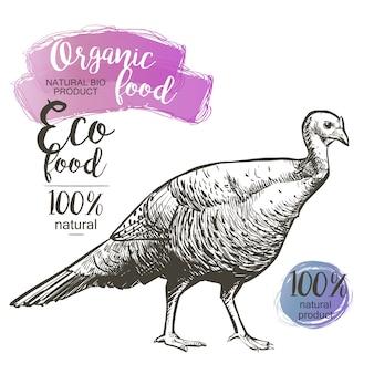 Turkey - vector engraved illustration in vintage style