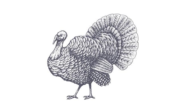 Turkey. vintage retro print, black white turkey drawing, engrave old school style.