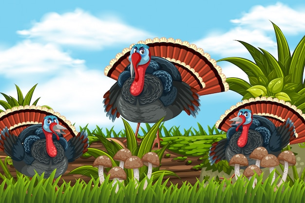 Turkeys in nature scene