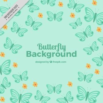 Бирюзовые бабочки фон